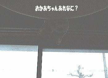 20050218205720.jpg