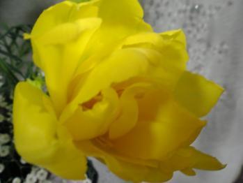アレンジ2月黄