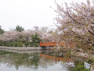 kyukakouen2007sakura.jpg
