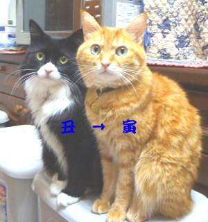 2010賀状猫