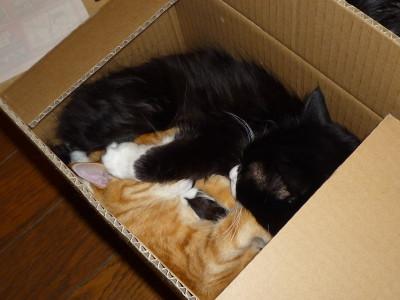 猫団子2010
