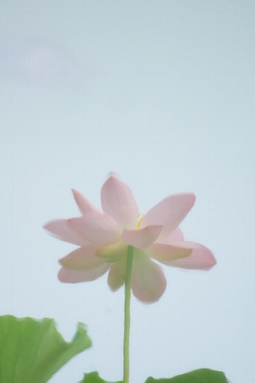 DSC_0066uのコピー0707no1