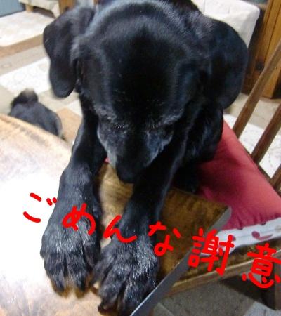 2011 5 26 nene 4