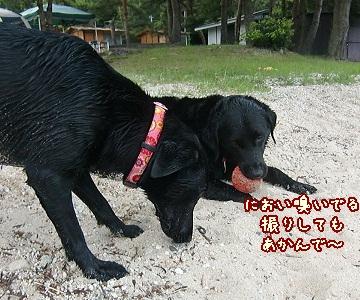 2011 6 29 琵琶湖 94