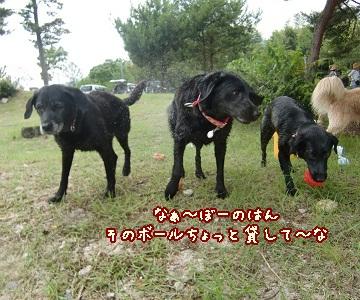 2011 6 29 琵琶湖 91