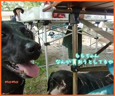 2011 6 29 琵琶湖 99