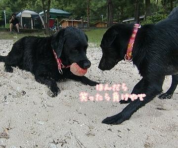 2011 6 29 琵琶湖 97