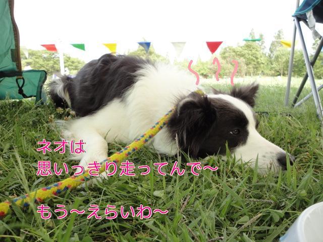 145_20110515104746.jpg