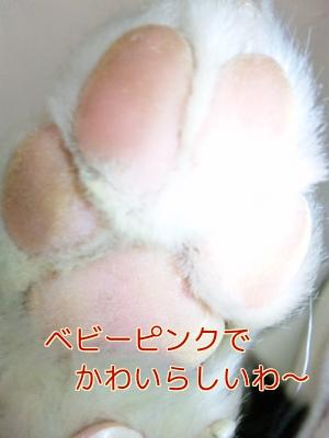 4q_20110428083923.jpg