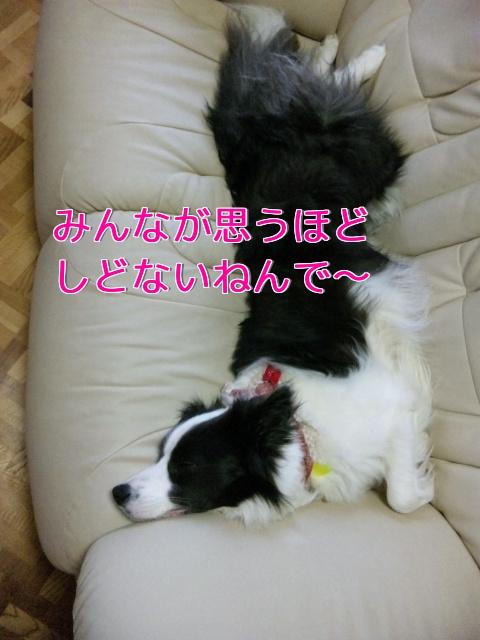 71_20110507150105.jpg