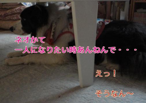 77_20110511194821.jpg