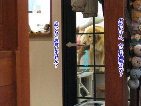 IMG_2868nw45.jpg