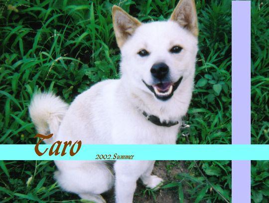 taro2002壁紙