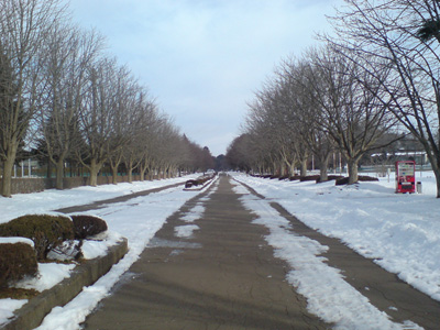 h21.2.7運動公園 のコピー.jpg