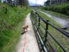 h21.4.29散歩 のコピー.jpg
