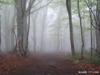 h21.7.19ブナ林 のコピー.jpg
