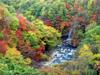 h21.10.14紅葉狩り05 のコピー.jpg