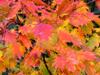 h21.10.14紅葉狩り03 のコピー.jpg