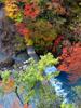h21.10.14紅葉狩り11 のコピー.jpg