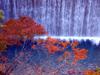 h21.10.14紅葉狩り09 のコピー.jpg