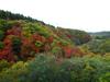 h21.10.14紅葉狩り07 のコピー.jpg