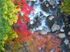 h21.10.14紅葉狩り06 のコピー.jpg