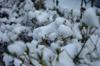 h21.12.19雪03 のコピー.jpg