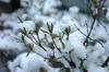 h21.12.19雪02 のコピー.jpg