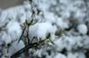 h21.12.19雪01 のコピー.jpg