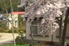 h22.5.5水道記念館と満開ソメイヨシノ02 のコピー.jpg