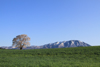 h22.5.10小岩井一本桜(AV11_02) のコピー.jpg