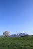 h22.5.10小岩井一本桜(AV8) のコピー.jpg