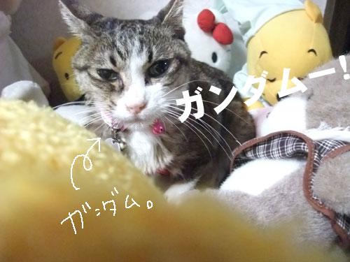20090925_5.jpg