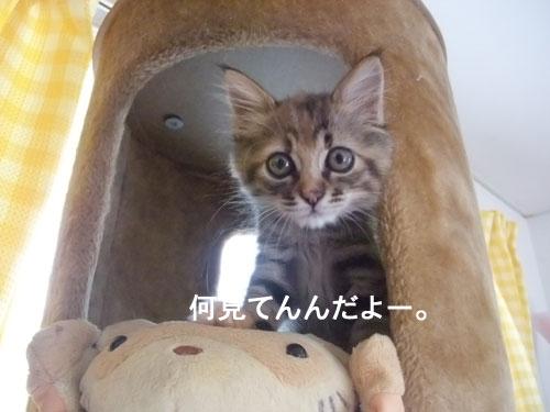 20091011_4.jpg