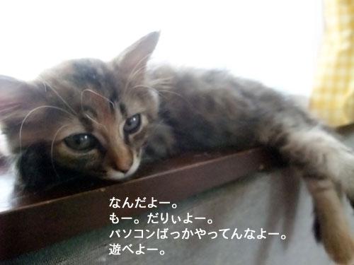 20091011_5.jpg