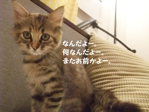 20091017_2.jpg