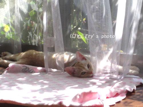 20091105_6.jpg