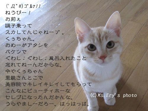 20091105_9.jpg