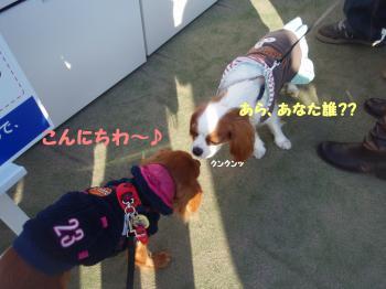 縺ゅi_convert_20081122232849