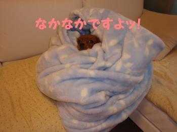 縺ェ縺祇convert_20081124210509