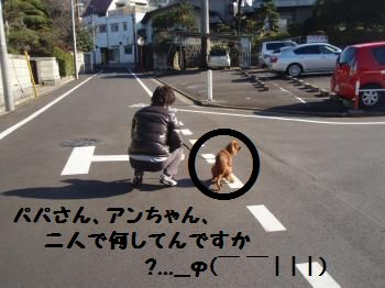 12・・3+003_convert_20081223180504