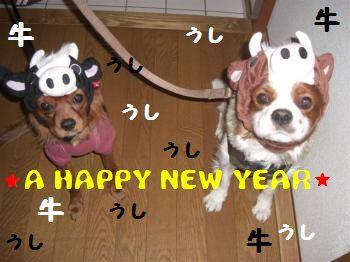 2009_NicoleAnnie_014_convert_20090111172133.jpg