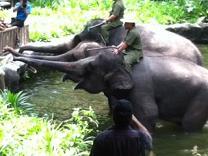 芸をする象