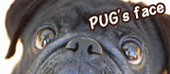「 PUG's face 」へ