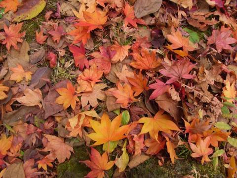 081127-Autumn