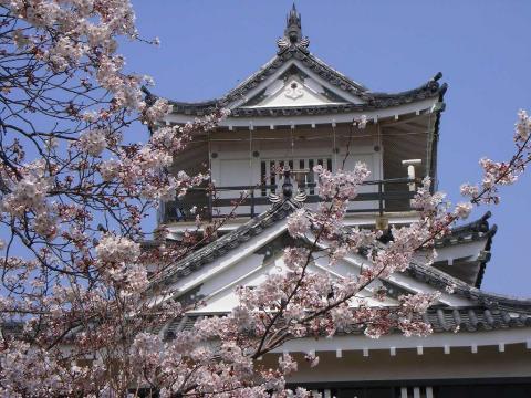 090401-Sakura