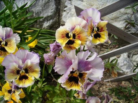 090420-flower