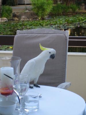 いたずら鳥