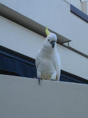 いたずら鳥 2