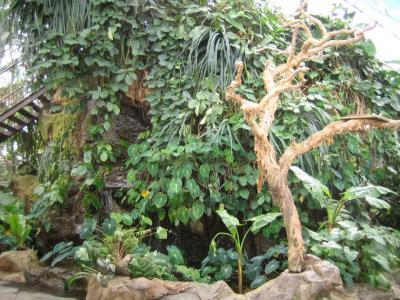 動植物園の中